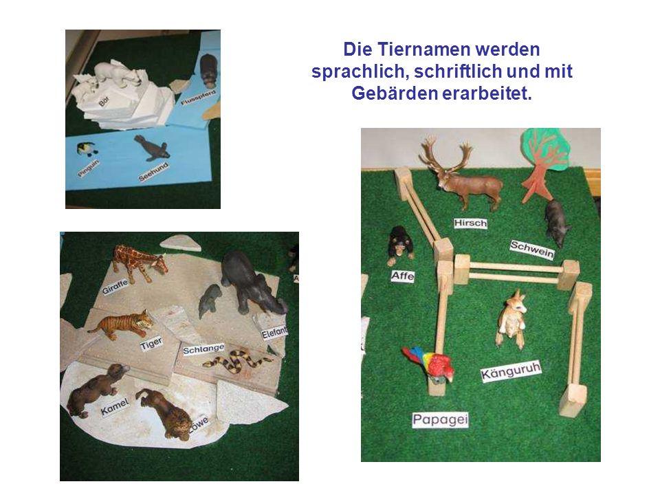 Die Tiernamen werden sprachlich, schriftlich und mit Gebärden erarbeitet.