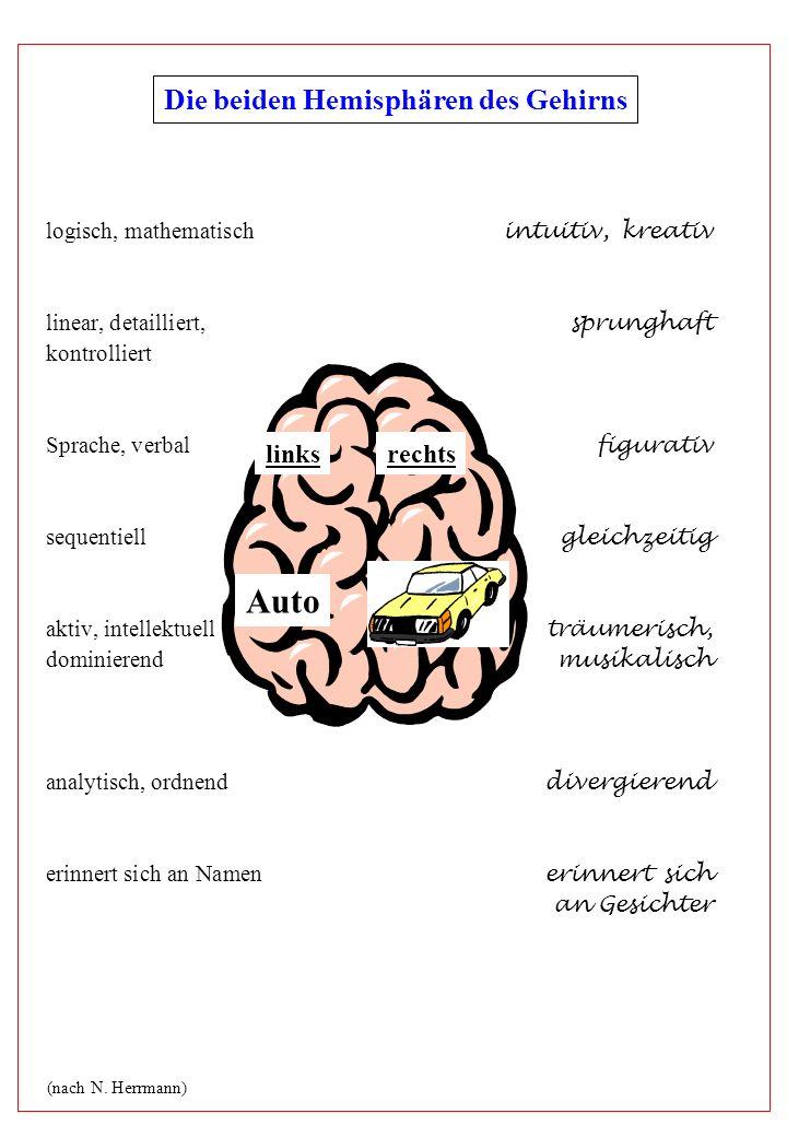 Die beiden Hemisphären des Gehirns