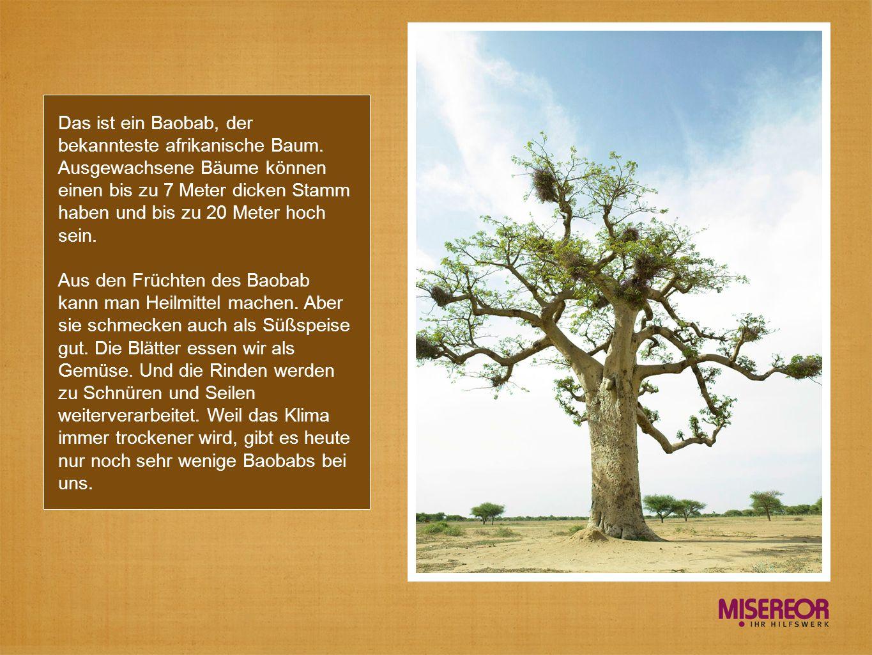 Das ist ein Baobab, der bekannteste afrikanische Baum