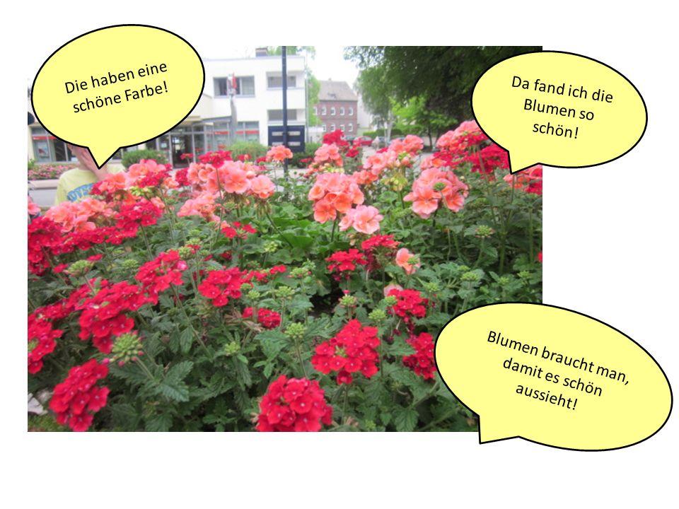 Die haben eine schöne Farbe! Da fand ich die Blumen so schön!