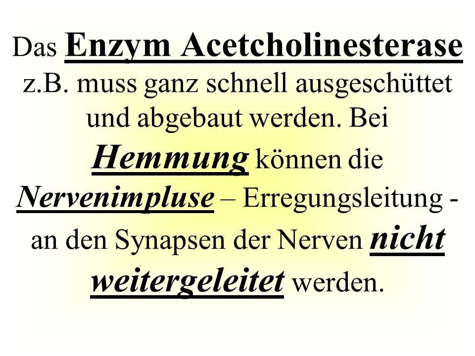 Das Enzym Acetcholinesterase z. B