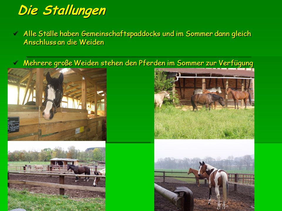 Die Stallungen Alle Ställe haben Gemeinschaftspaddocks und im Sommer dann gleich Anschluss an die Weiden.