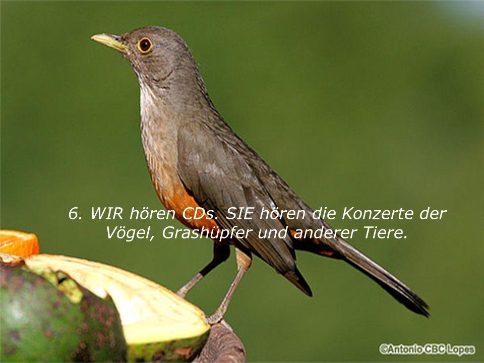 6. WIR hören CDs. SIE hören die Konzerte der Vögel, Grashüpfer und anderer Tiere.