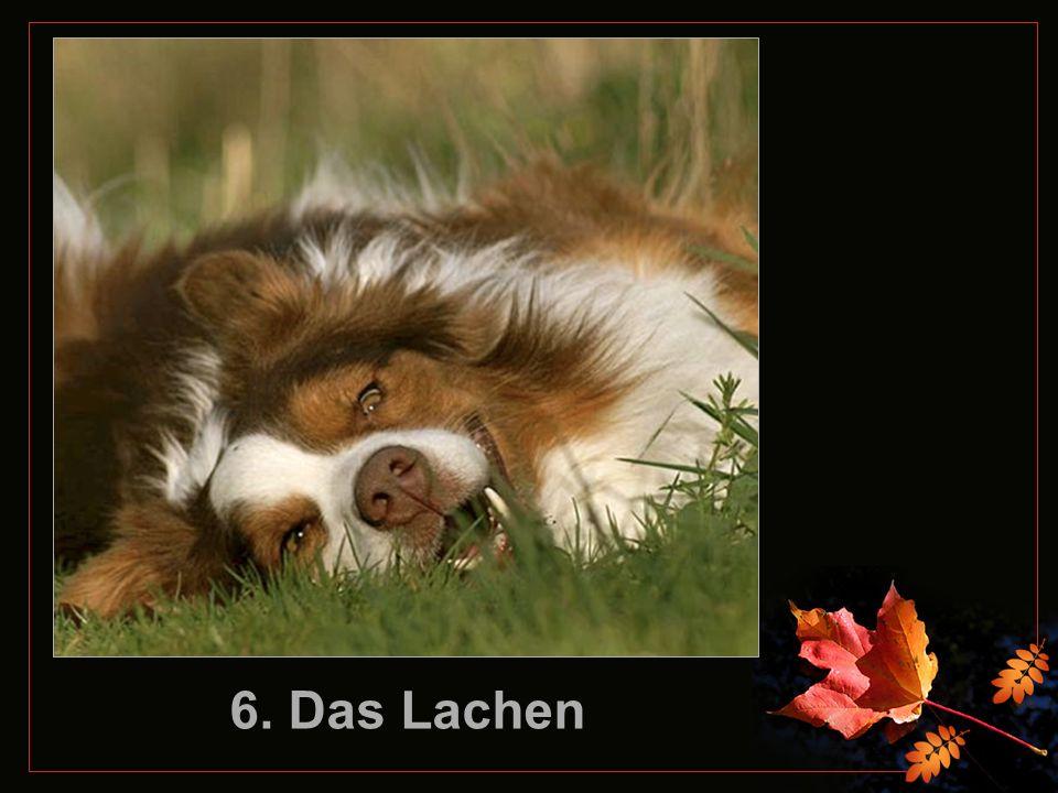 6. Das Lachen