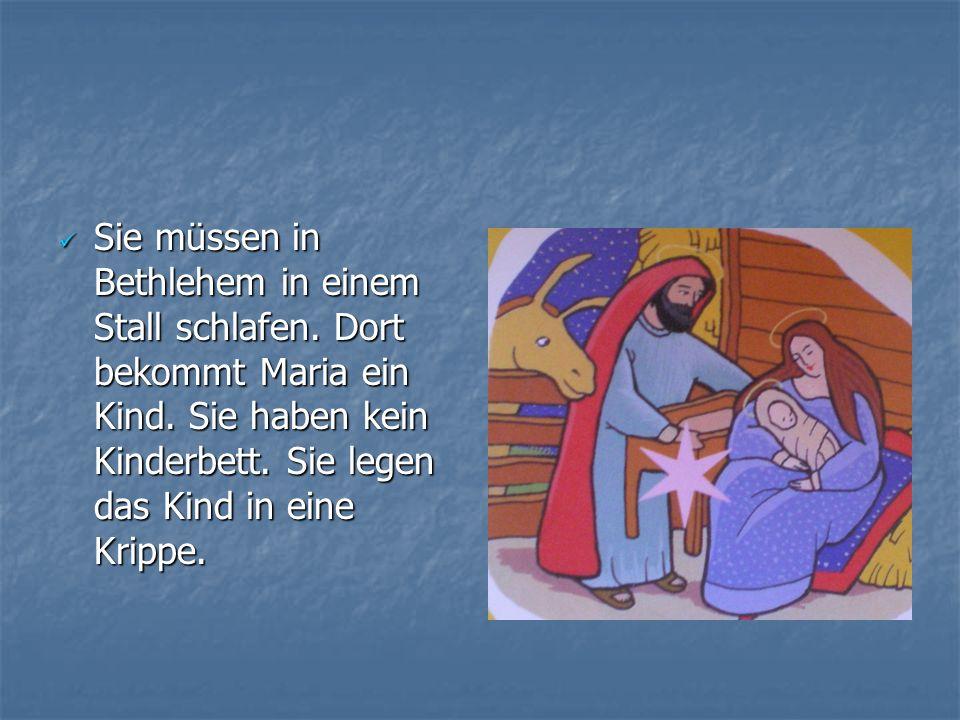 Sie müssen in Bethlehem in einem Stall schlafen