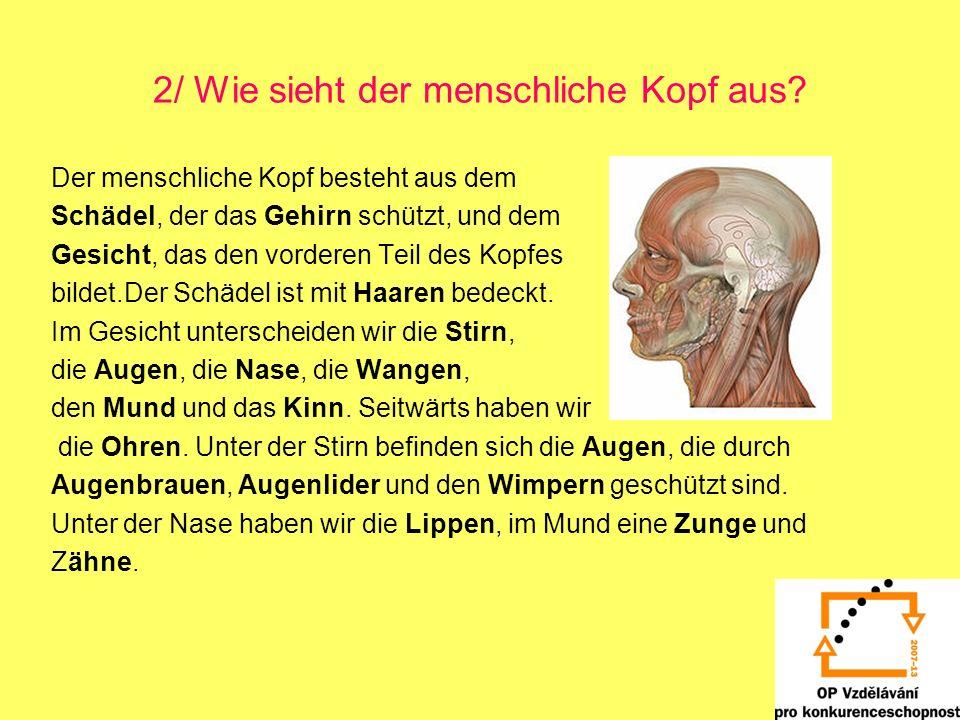 2/ Wie sieht der menschliche Kopf aus