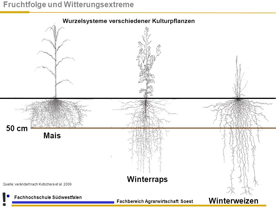 Wurzelsysteme verschiedener Kulturpflanzen