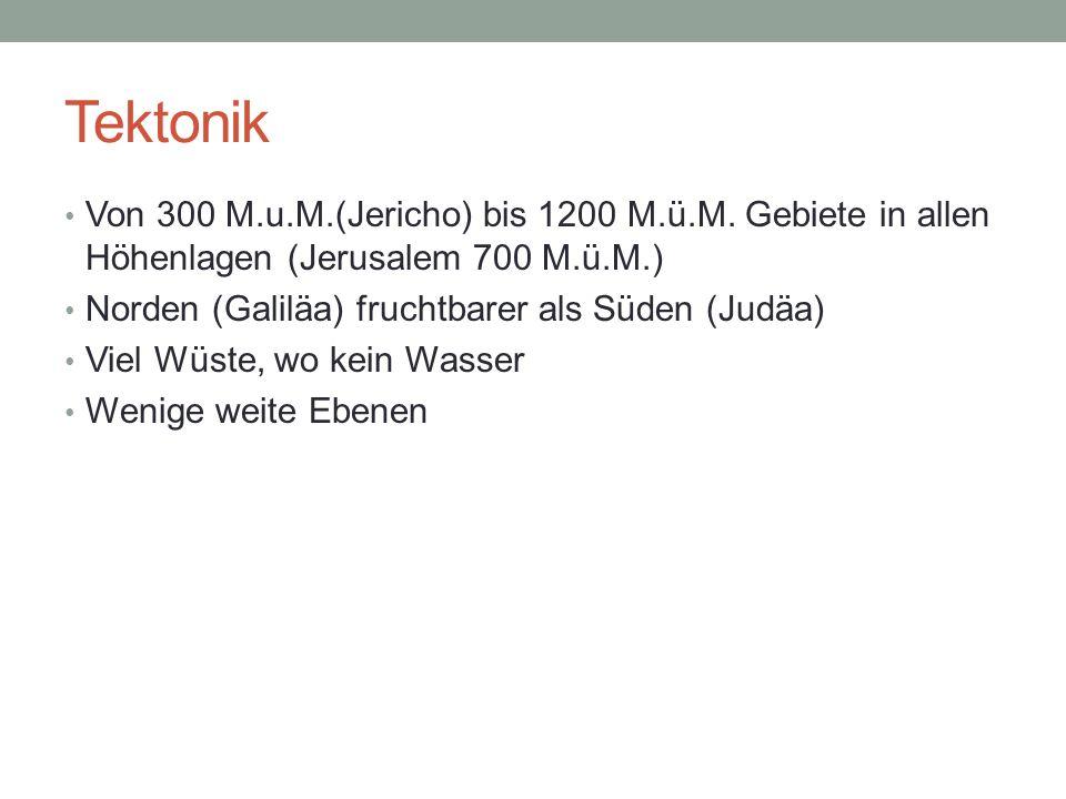 TektonikVon 300 M.u.M.(Jericho) bis 1200 M.ü.M. Gebiete in allen Höhenlagen (Jerusalem 700 M.ü.M.) Norden (Galiläa) fruchtbarer als Süden (Judäa)