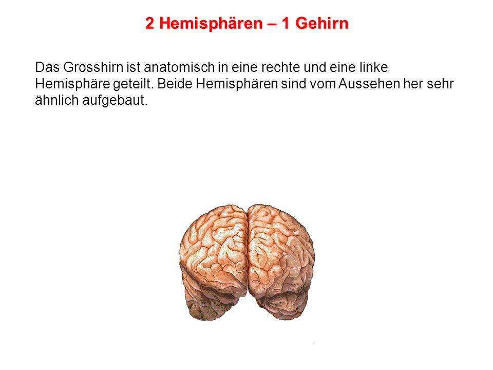2 Hemisphären – 1 Gehirn