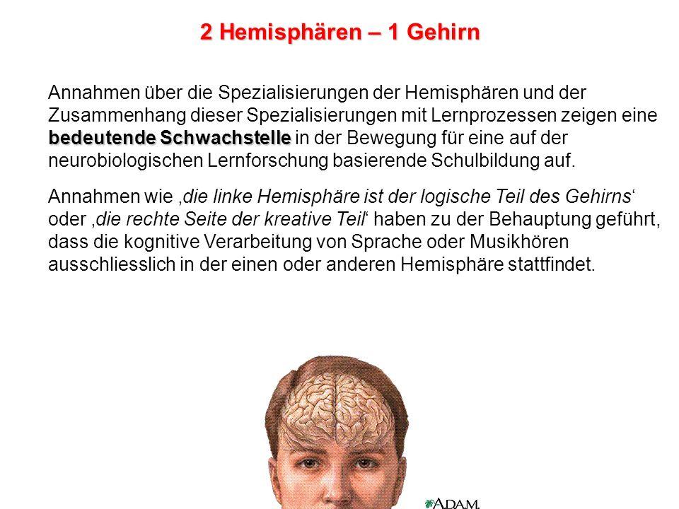 2 Hemisphären – 1 Gehirn Annahmen über die Spezialisierungen der Hemisphären und der.