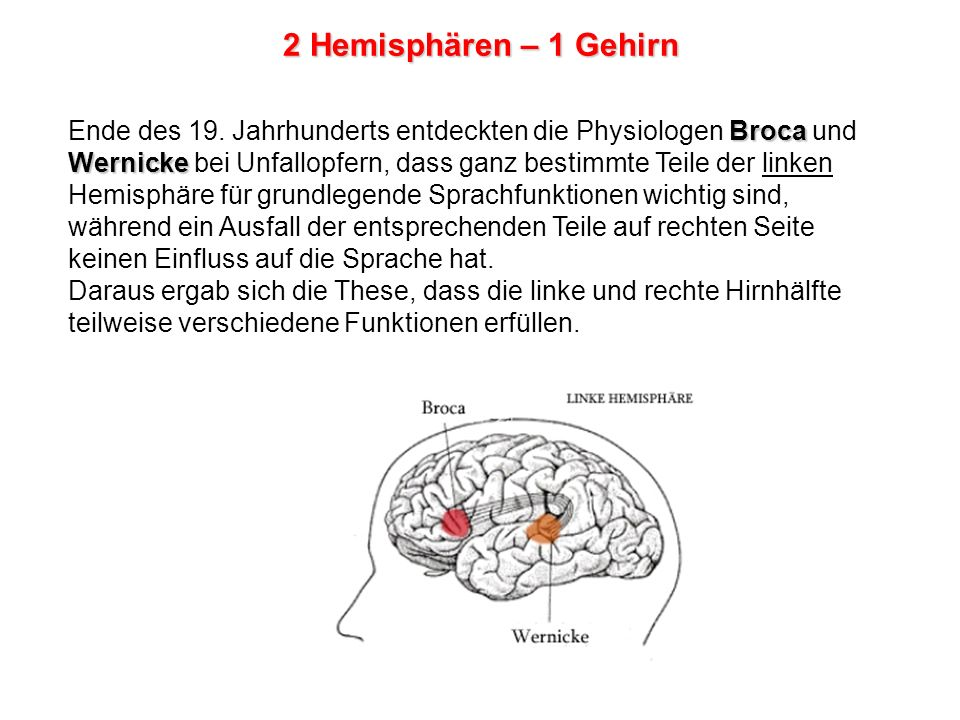 Erfreut Gehirn Diagramm Mit Funktionen Beschriftet Fotos ...