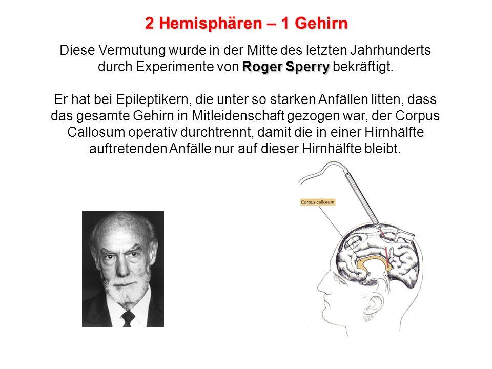 2 Hemisphären – 1 Gehirn Diese Vermutung wurde in der Mitte des letzten Jahrhunderts durch Experimente von Roger Sperry bekräftigt.