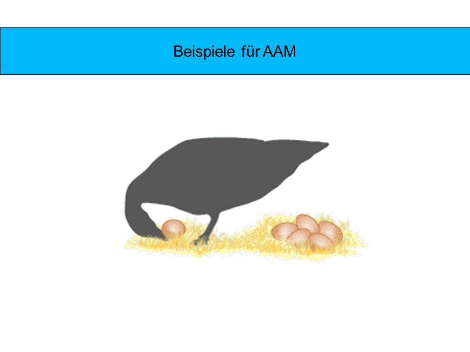 Beispiele für AAM