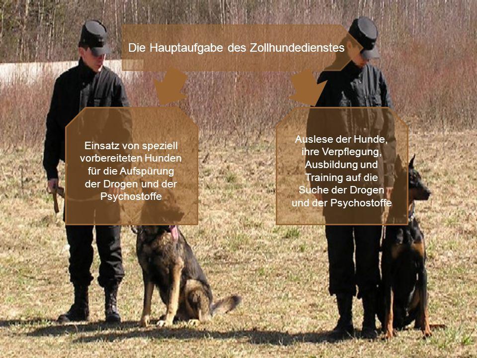 Die Hauptaufgabe des Zollhundedienstes