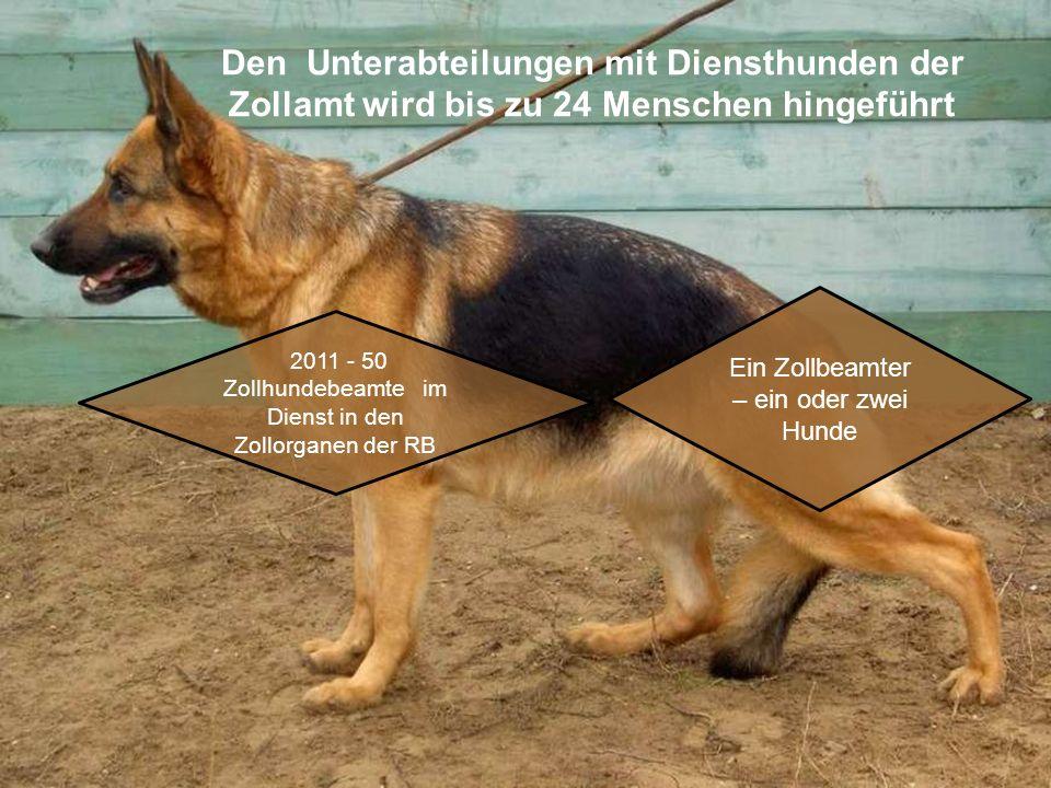 Den Unterabteilungen mit Diensthunden der Zollamt wird bis zu 24 Menschen hingeführt