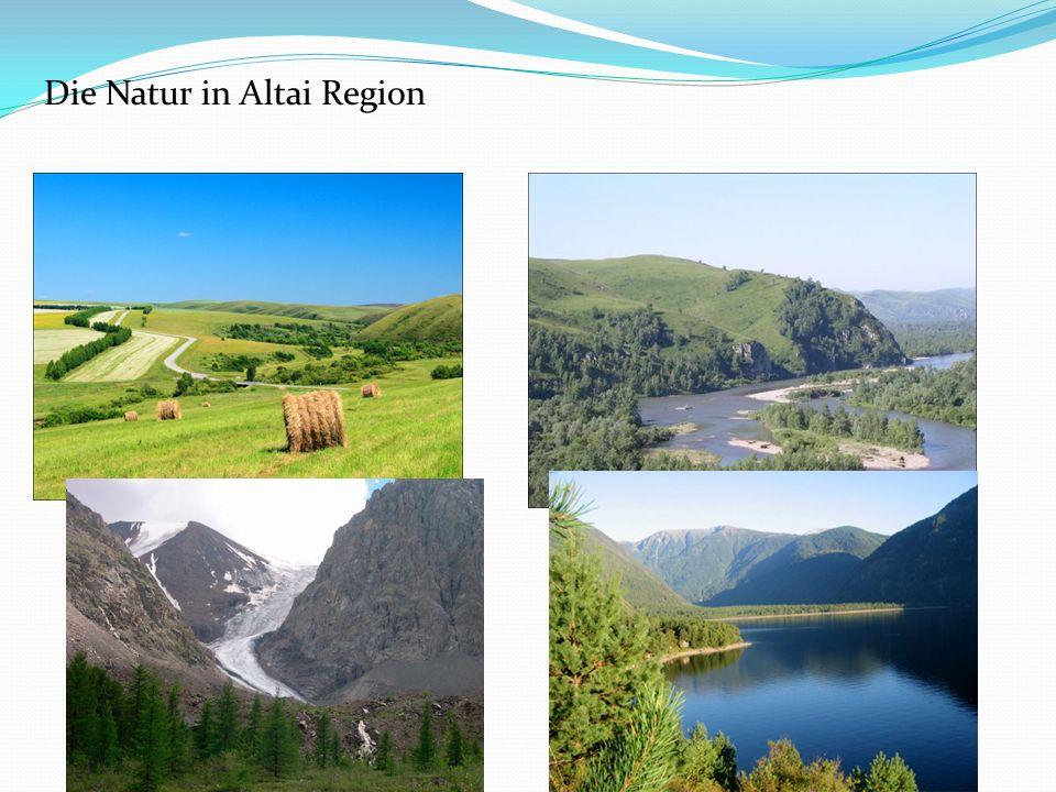 Die Natur in Altai Region