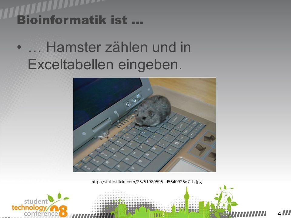 … Hamster zählen und in Exceltabellen eingeben.