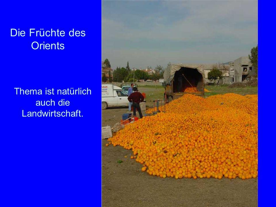 Die Früchte des Orients