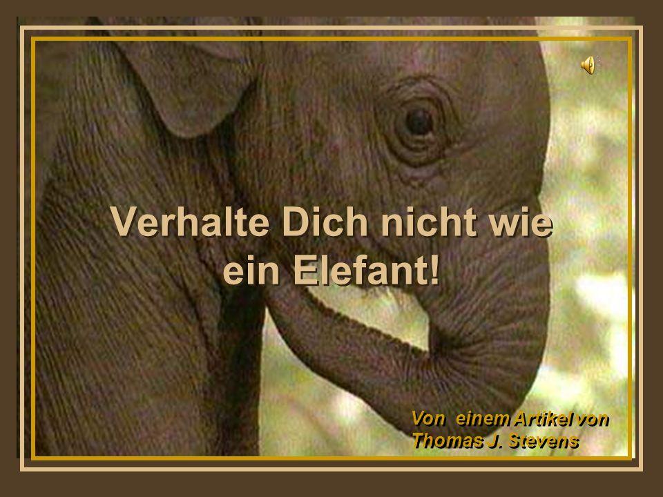 Verhalte Dich nicht wie ein Elefant!