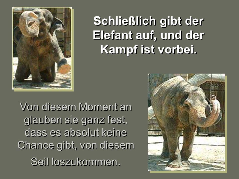 Schließlich gibt der Elefant auf, und der Kampf ist vorbei.