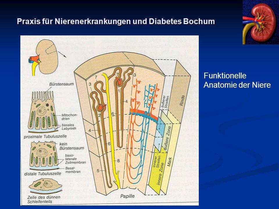 Charmant Funktionelle Anatomie Der Niere Ideen - Menschliche ...