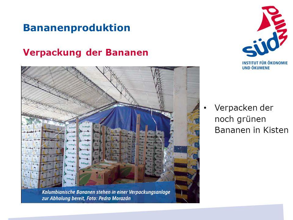 Bananenproduktion Verpackung der Bananen