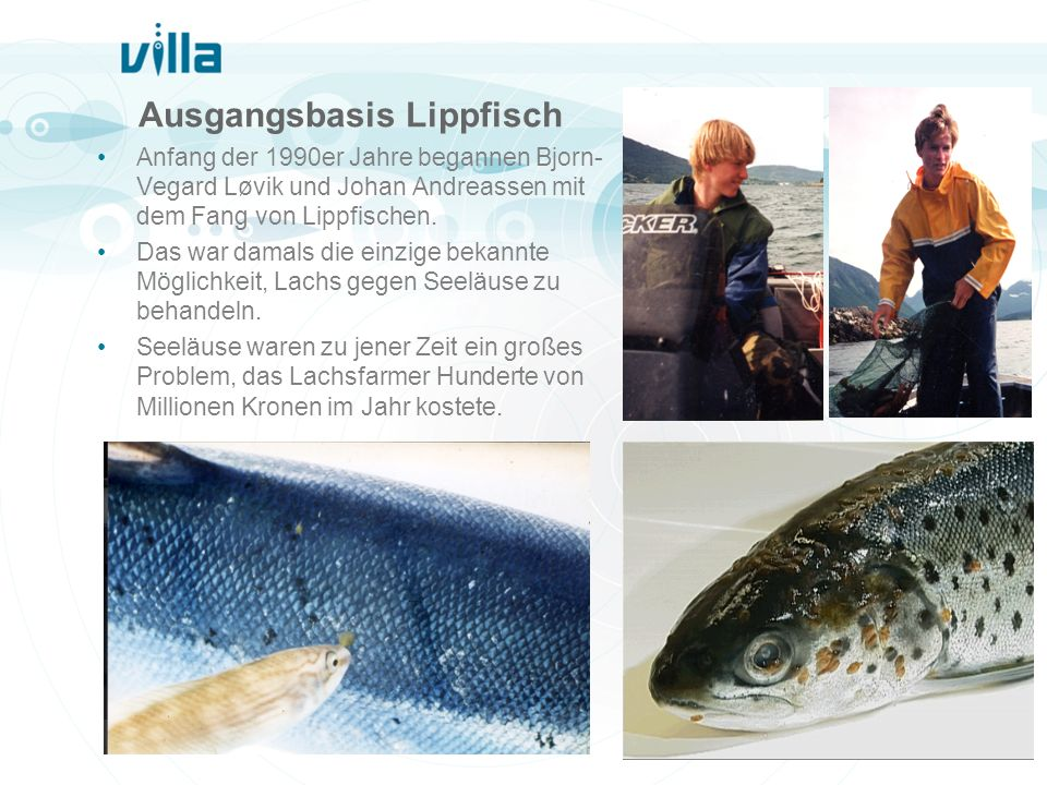 Ausgangsbasis Lippfisch