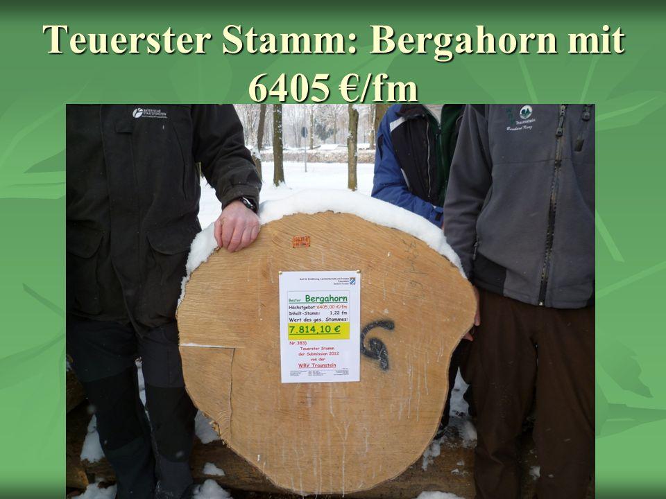Teuerster Stamm: Bergahorn mit 6405 €/fm