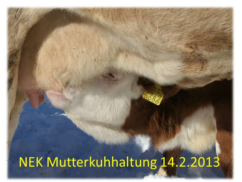 NEK Mutterkuhhaltung 14.2.2013