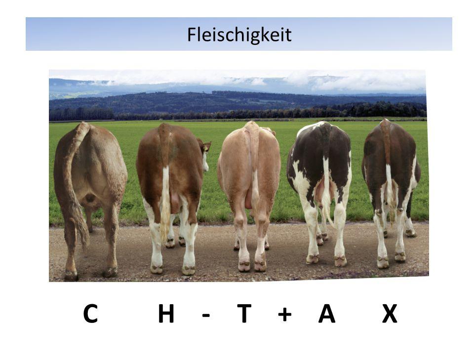 Fleischigkeit C H - T + A X