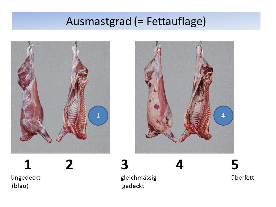 Ausmastgrad (= Fettauflage)