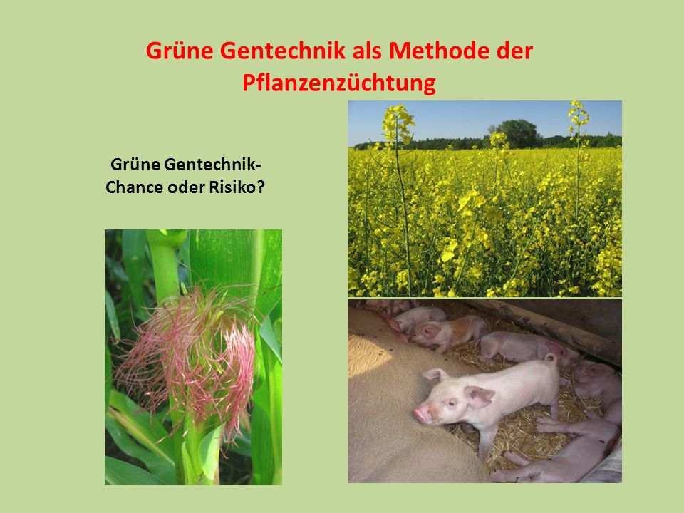 Grüne Gentechnik als Methode der
