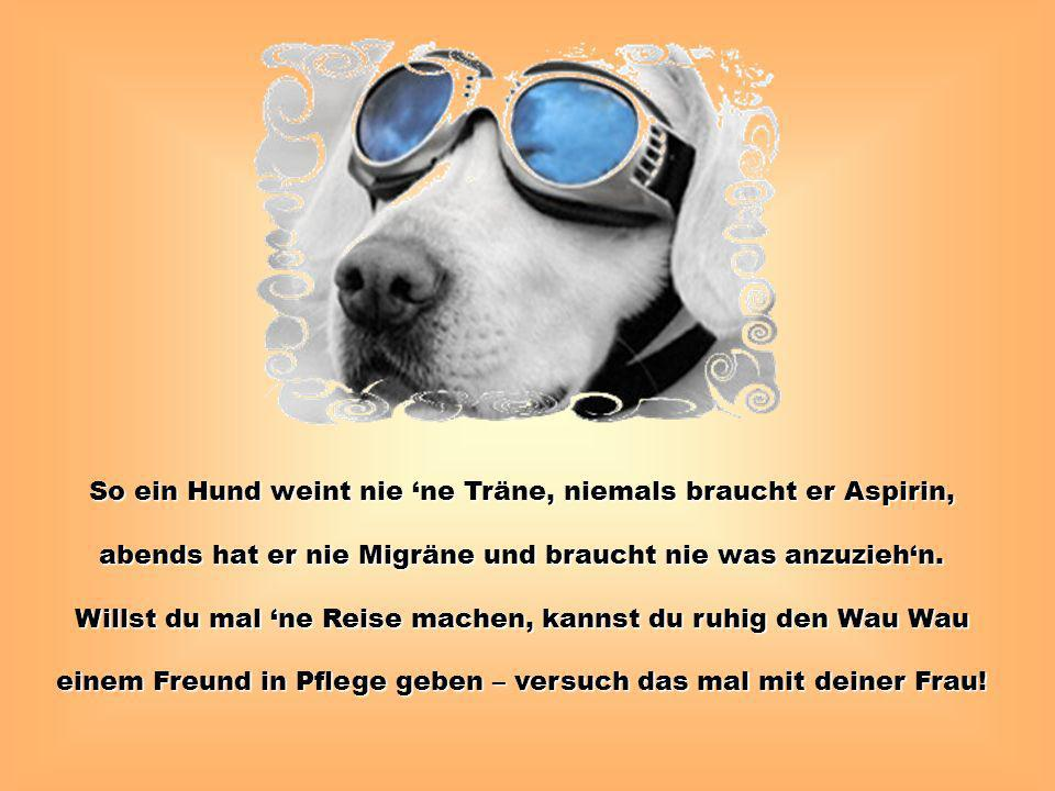 So ein Hund weint nie 'ne Träne, niemals braucht er Aspirin,