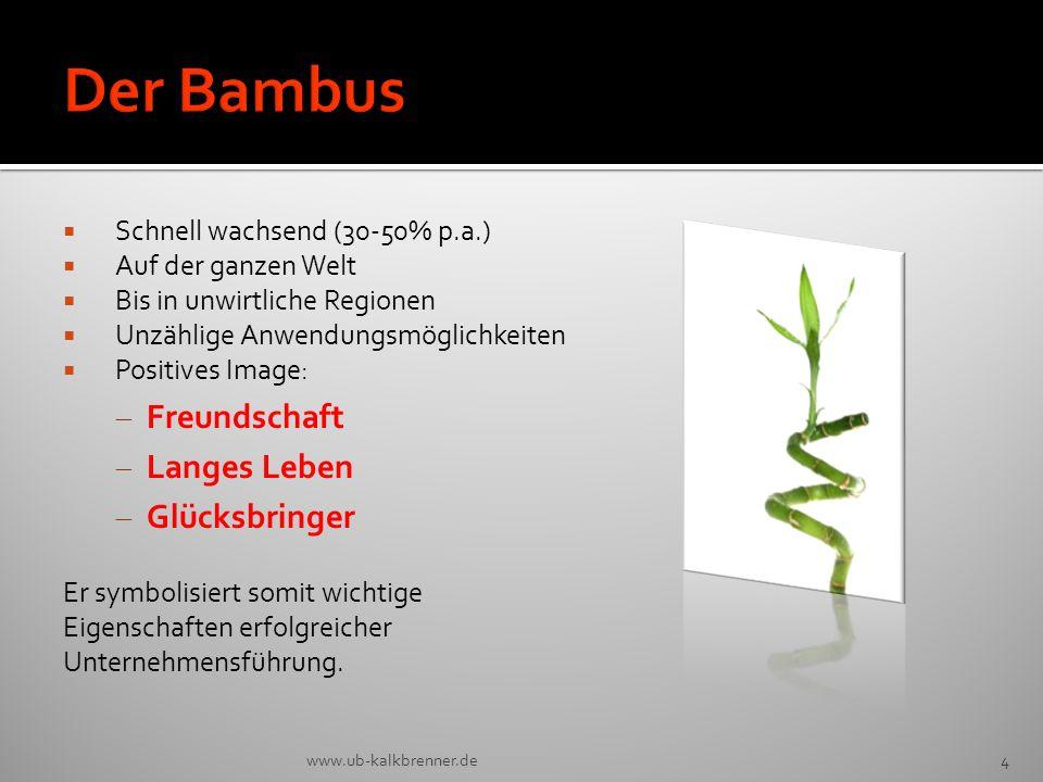 Der Bambus Freundschaft Langes Leben Glücksbringer