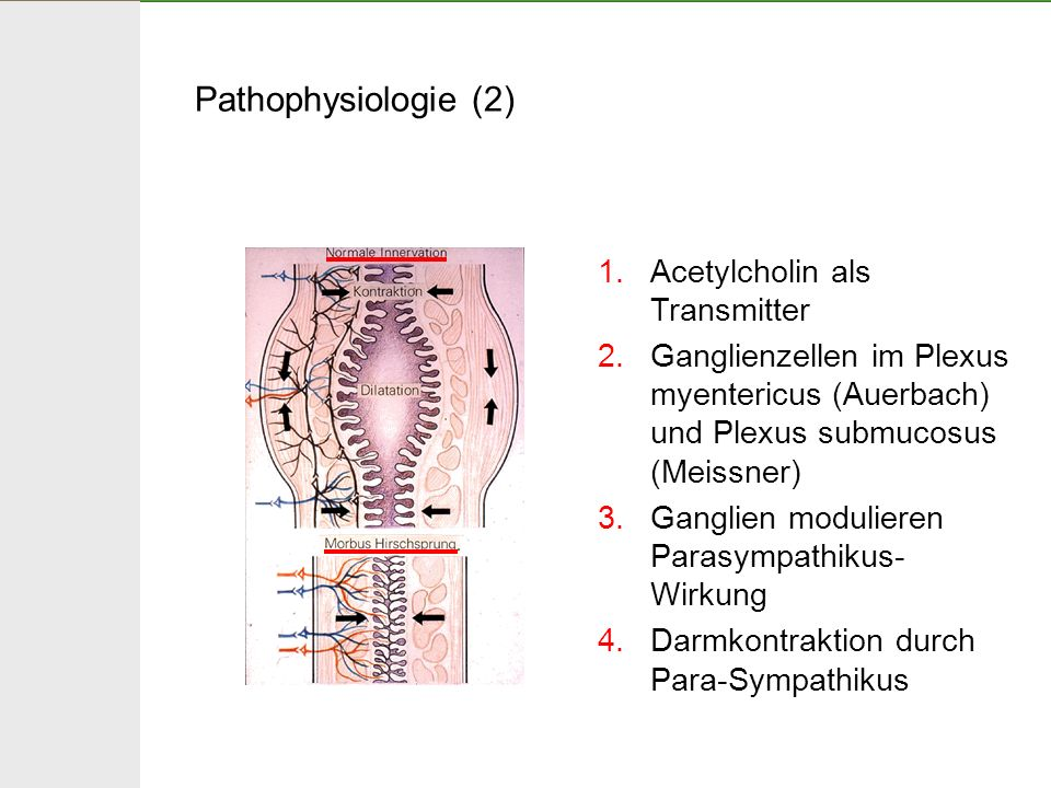 Pathophysiologie (2) Acetylcholin als Transmitter