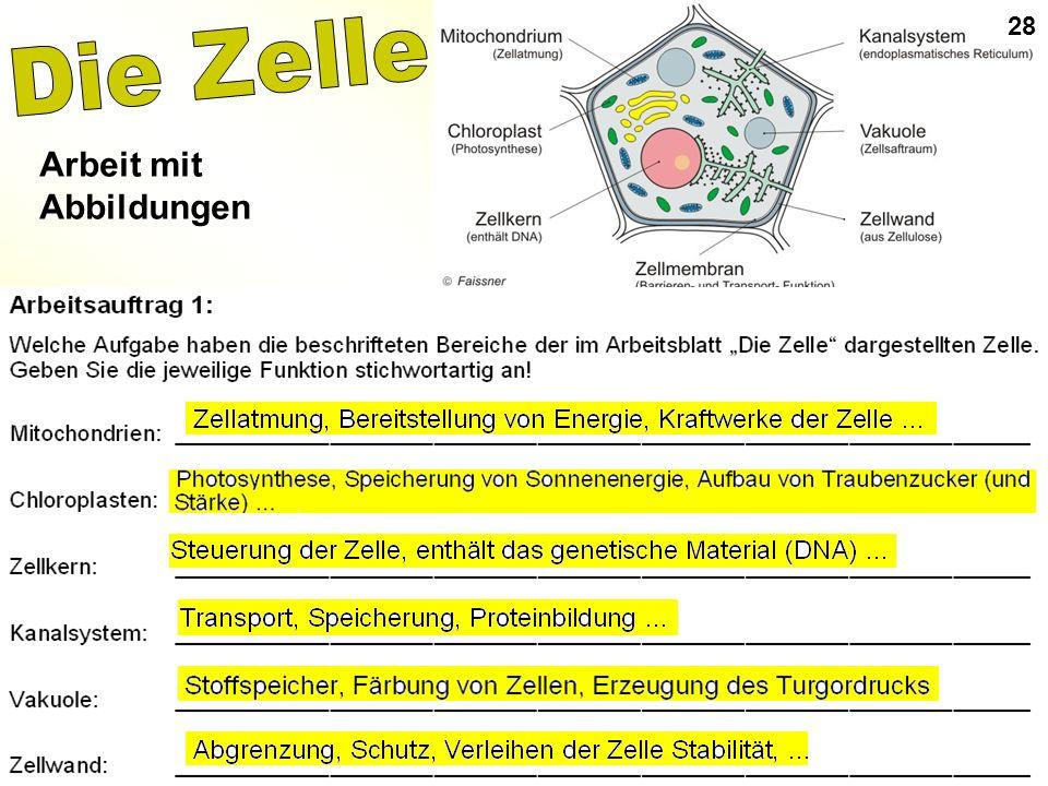 28 Die Zelle Arbeit mit Abbildungen