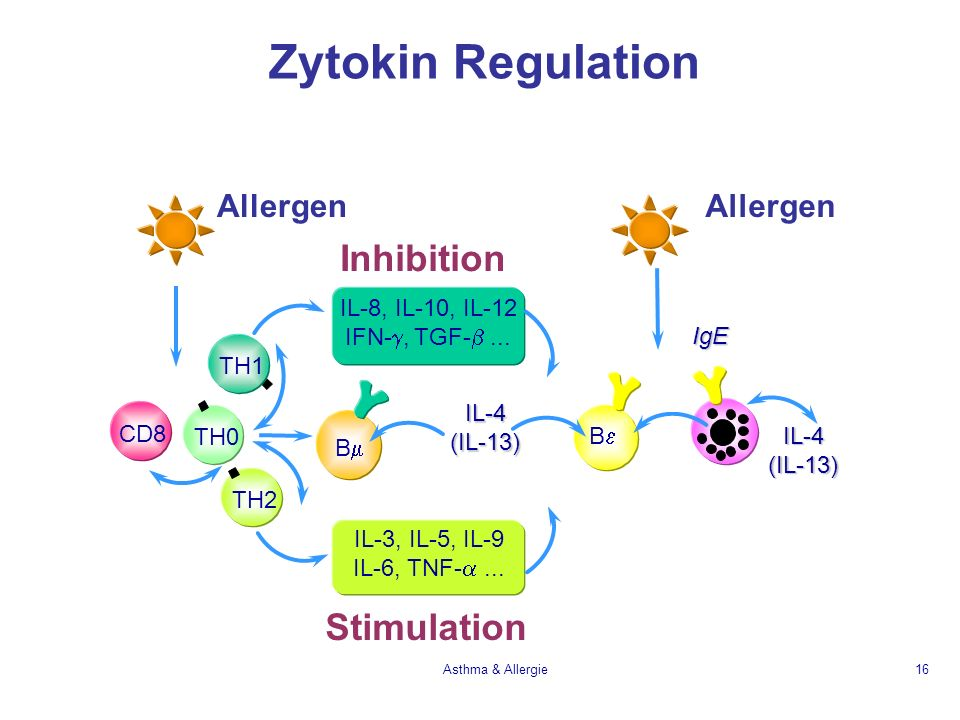 Zytokin Regulation Inhibition Stimulation Allergen IL-8, IL-10, IL-12