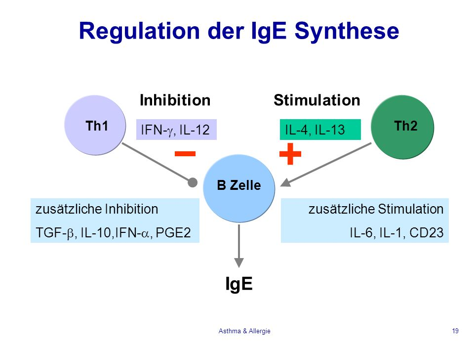 Regulation der IgE Synthese