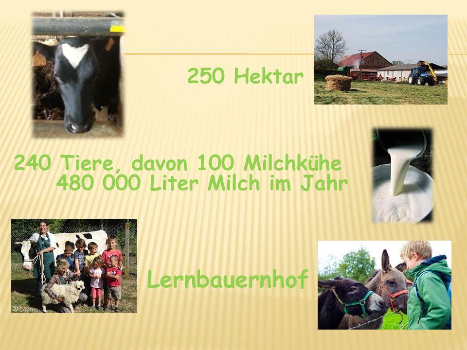 250 Hektar 240 Tiere, davon 100 Milchkühe 480 000 Liter Milch im Jahr Lernbauernhof