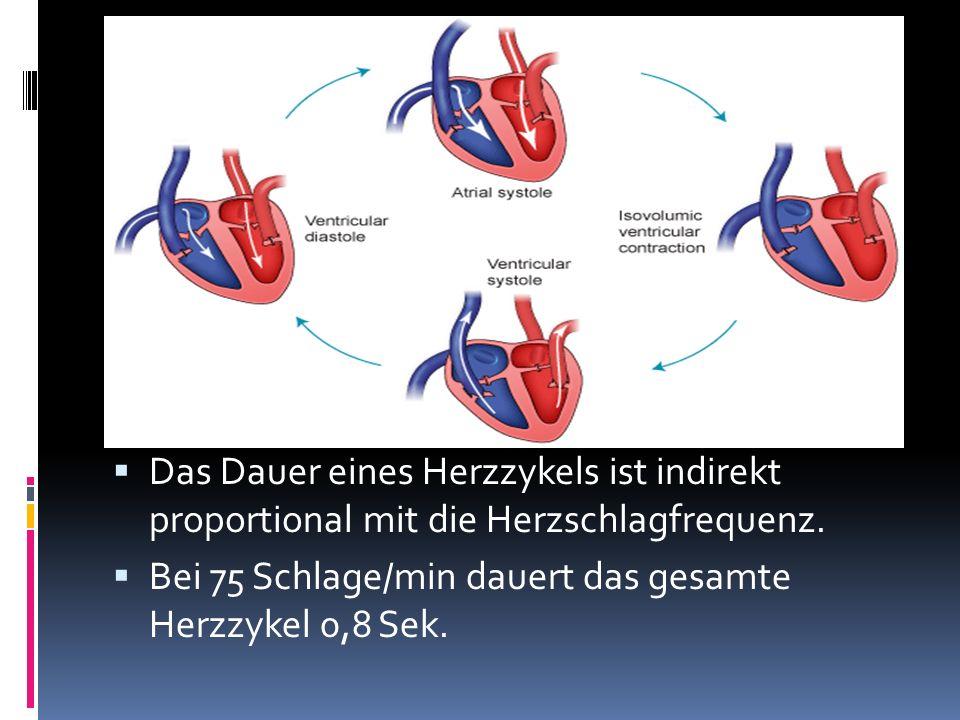 Das Dauer eines Herzzykels ist indirekt proportional mit die Herzschlagfrequenz.