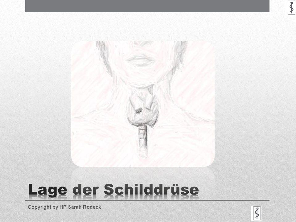 Lage der Schilddrüse Copyright by HP Sarah Rodeck