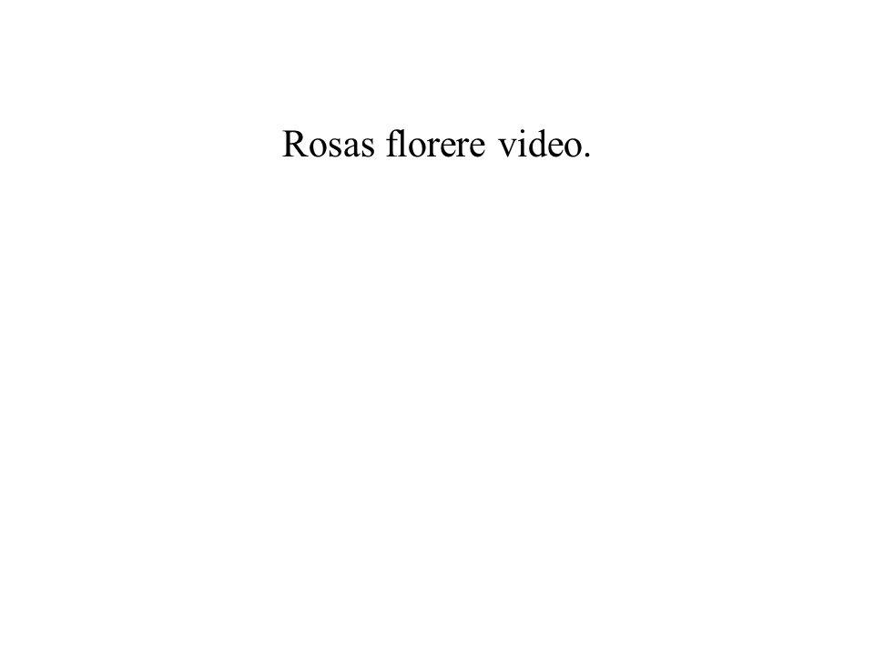Rosas florere video. Übersetzung (wörtlich)
