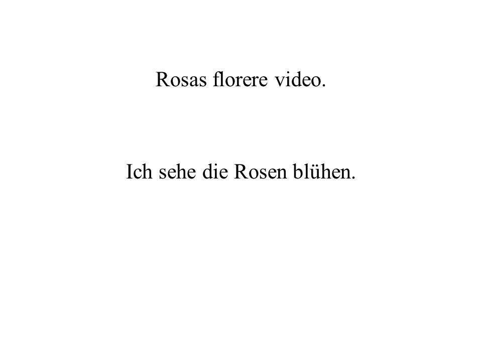 Ich sehe die Rosen blühen.