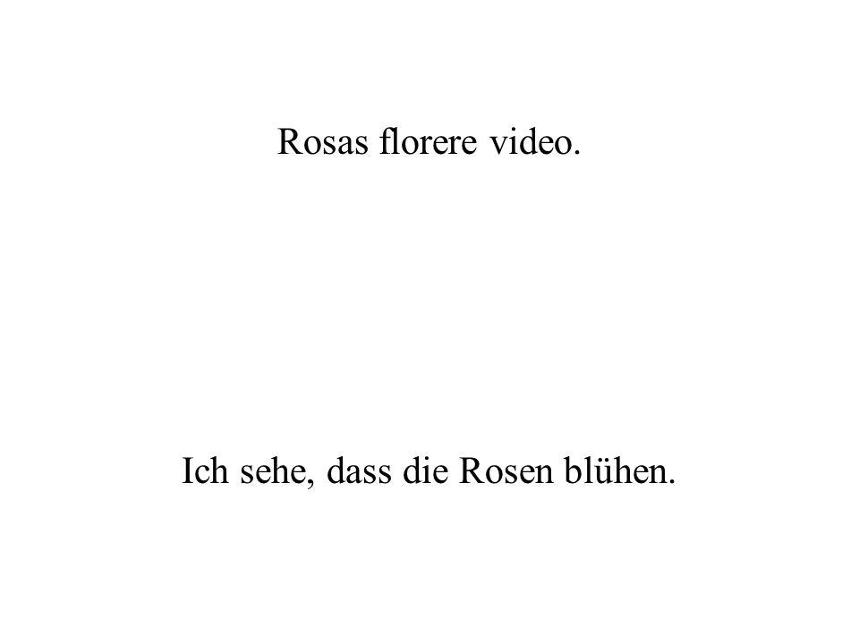 Ich sehe, dass die Rosen blühen.