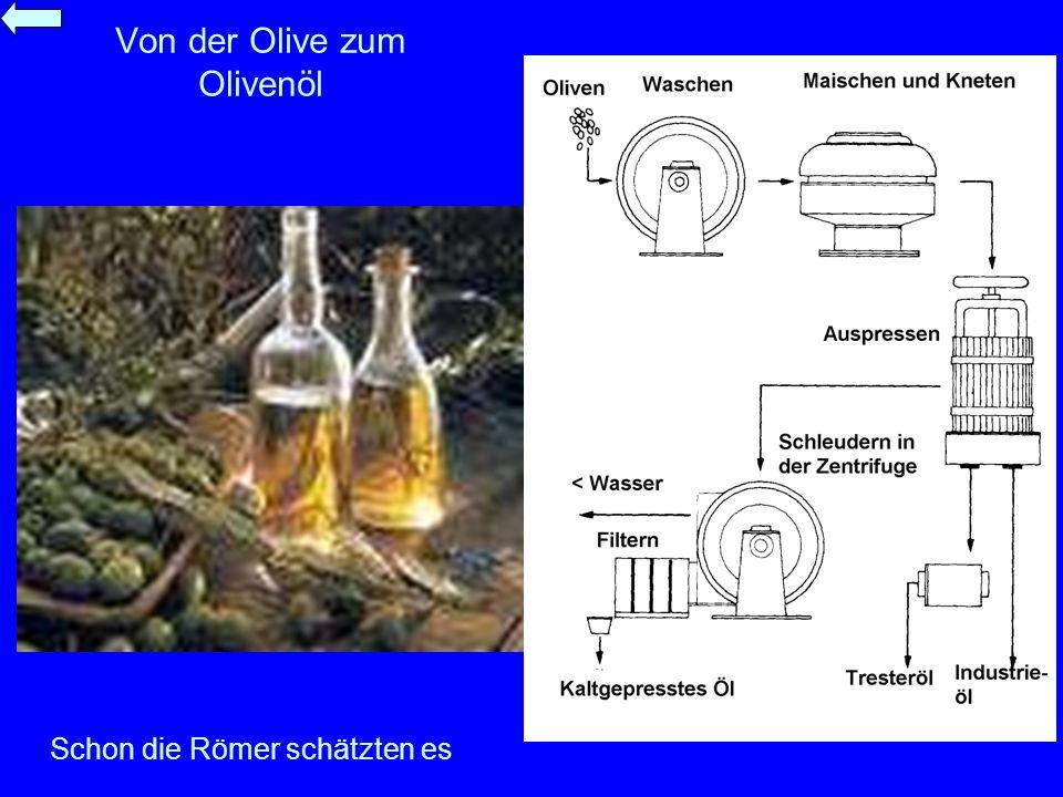 Von der Olive zum Olivenöl