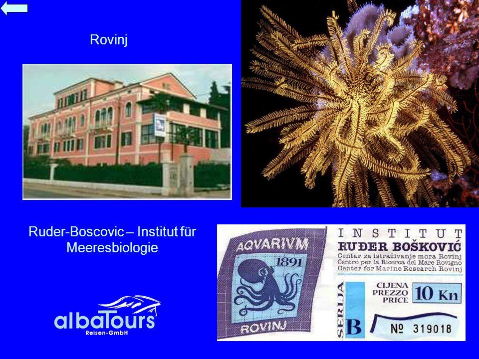 Ruder-Boscovic – Institut für Meeresbiologie