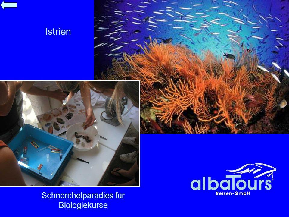 Schnorchelparadies für Biologiekurse