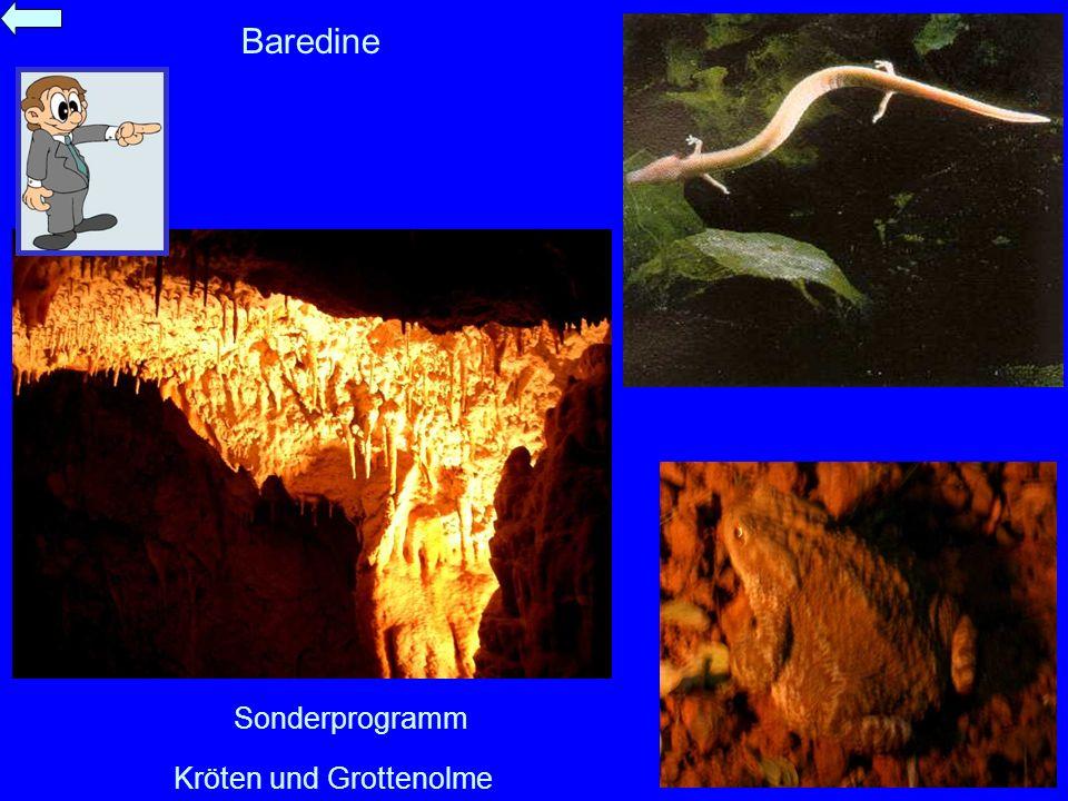 Kröten und Grottenolme