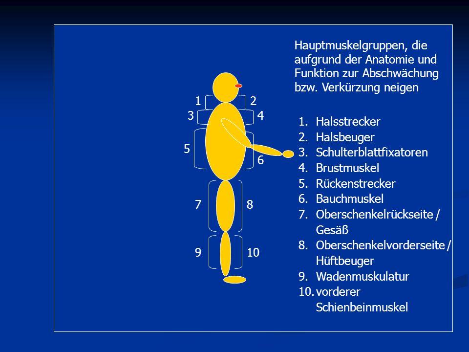 Hauptmuskelgruppen, die aufgrund der Anatomie und Funktion zur Abschwächung bzw. Verkürzung neigen