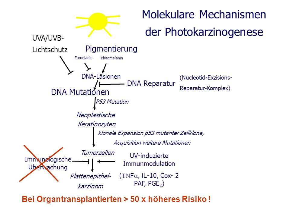 Molekulare Mechanismen der Photokarzinogenese